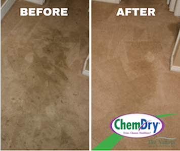 Chem-Dry carpet cleaning before and after results